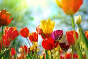 Trainen voorjaarsvakantie